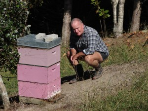 Kevin Wallace checking on his bees